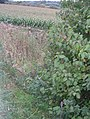 Footpath - Keighley Road - geograph.org.uk - 1513658.jpg