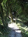 Footpath up Limekiln Scarp - geograph.org.uk - 1455998.jpg