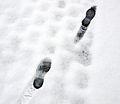 Footprints in snow 9 12 2012.jpg