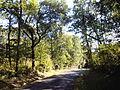 Forêt à breuillet.jpg