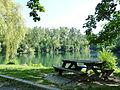 Forêt de la Robertsau-Karpfenloch (5).jpg