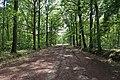 Forêt domaniale de Bois-d'Arcy 31.jpg