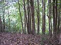 Forest (4823353455).jpg