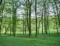 Forest - panoramio - paulnasca (99).jpg