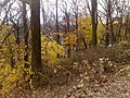 Forest Park, Queens, NY, USA - panoramio (4).jpg