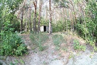 Umyotsky District - Forest in Umyotsky District