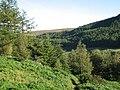 Forest walks, Thornielee - geograph.org.uk - 532810.jpg