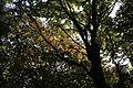 Foresta casentinese MG 1665.JPG