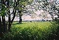 Freedom Farm, East Green, Great Bradley, Suffolk - geograph.org.uk - 47864.jpg