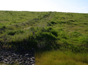 Fresno Municipal Sanitary Landfill - A drainage channel on the slopes of the former landfill