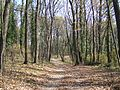 Fruška gora - šuma u jesen 1.jpg