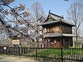 Fukuoka Castle in April.JPG