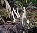 Fungi (48803776198).jpg