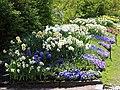 Göteborgs botaniska trädgård-IMG 6539.JPG