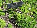 Gardenology.org-IMG 0523 hunt07mar.jpg