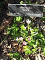 Gardenology.org-IMG 0856 hunt07mar.jpg