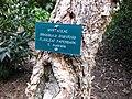 Gardenology.org-IMG 2560 ucla09.jpg