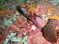 Gastropods at Partridge Point P7190523.JPG
