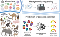 Genomic signatures for predicting the zoonotic potential of novel viruses (graphical summary).png