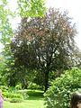 Giardino di Ninfa 21.jpg