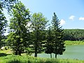 Goč - panoramio.jpg
