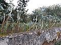 Gondar, Lugo 03.jpg