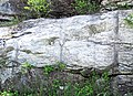 Gouverneur Marble (Mesoproterozoic, ~1.1 Ga; Route 11 roadcut north of Antwerp, New York State, USA) 51.jpg
