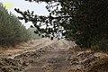 Gralhas, 5470, Portugal - panoramio (6).jpg