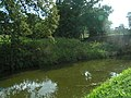 Grand Western Canal near Tiverton - geograph.org.uk - 1020669.jpg