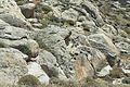 Granodiorite bowls Kynthos Delos 102231.jpg