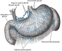 Splenic lymph nodes Wikipedia