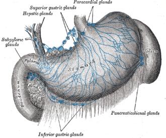 Celiac lymph nodes - Lymphatics of stomach, etc.