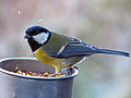 Great Tit (8266953117).jpg