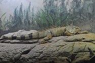 Green Iguana (8455423120).jpg