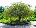 Green tree1.jpg