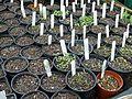 Greenhouse bench - Flickr - peganum (2).jpg