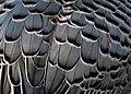 Grey Feathers (6353929067).jpg