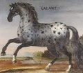 Hästporträtt från cirka 1650, på grå apelkastad häst - Skoklosters slott - 95248.tif