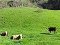 Höllsteig im Schwarzwald - panoramio.jpg