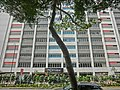 HK 油麻地 Yau Ma Tei 窩打老道 Waterloo Road Chinese YMCA Kln Centre facade Jan-2014 tree.JPG