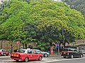 HK Mid-Levels Bonham Road HKU campus near bus stop Taxi trees April 2013.JPG