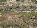 Hadassah Trail P1150480.JPG