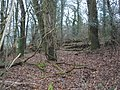 Hailshot Wood - geograph.org.uk - 1126983.jpg