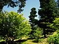 Hakone Gardens, Saratoga, CA - IMG 9170.JPG