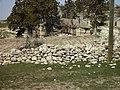 Halkalı Yaylası Alıçavuş.R.Evi - panoramio.jpg