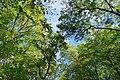 Hambacher Forst bei Morschenich DE 2018-09-09 F.jpg