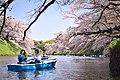 Hanami in Chidorigafuchi (46156365024).jpg