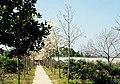 Hangzhou, Botánico 1978 04.jpg