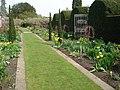 Herbaceous Borders at Hampton Court - geograph.org.uk - 467379.jpg