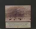 Herd of buffaloes in the National Park, Banff, North West Territories Canada Photo A (HS85-10-11285).jpg